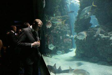Faire son événement dans un aquarium